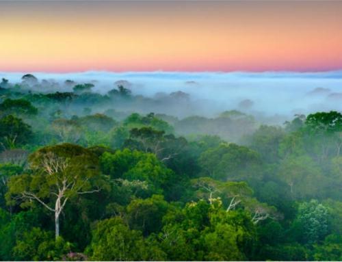 Amazon Ecoservices