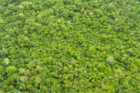 Assunto: Vista aérea da floresta de terra firme na região do Baixo Rio Negro Local: Novo Airão - AM Data: 11/2013 Autor: Marcos Amend/Pulsar Imagens