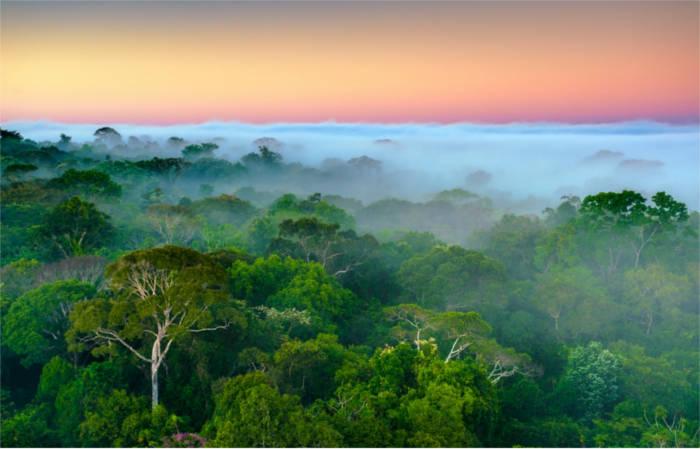 AMAZONES ECOSERVICES