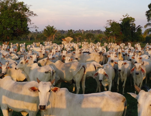 Cenários para a intensificação da pecuária de corte no Brasil
