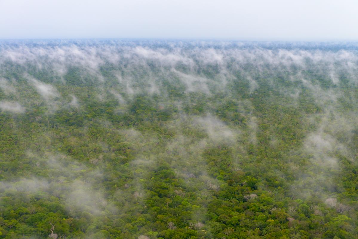 Assunto: Imagem aérea da fase de evaporação do ciclo da água após chuva na floresta Amazônica Local: Novo Airão - AM Data: 11/2013 Autor: Marcos Amend/Pulsar Imagens