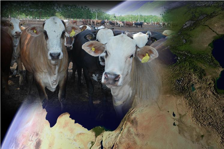 Pecuária brasileira no mundo